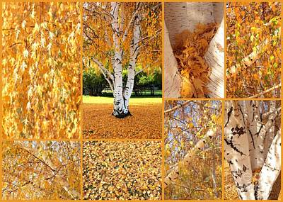 Photograph - Golden Weeping Birch Tree Collage by Carol Groenen