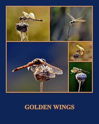 Photograph - Golden Wings by AJ  Schibig