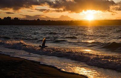 Photograph - Golden Wings Golden Water by Georgia Mizuleva
