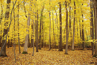 Photograph - Golden Woods by Aimee L Maher Photography and Art Visit ALMGallerydotcom