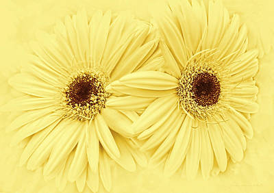 Gerber Daisy Photograph - Golden Yellow Gerber Daisy Flowers by Jennie Marie Schell