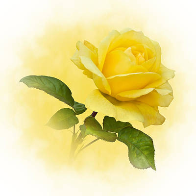 Golden Yellow Rose Art Print