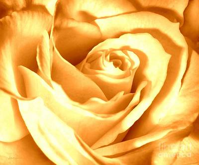 Photograph - Golden Yellow Rose by Janine Riley