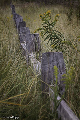 Photograph - Goldenrod By The Fence by Fran Gallogly