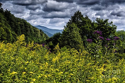 Goldenrod Highland Scenic Highway Art Print by Thomas R Fletcher