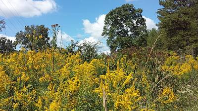 Photograph - Goldenrods by Kenny Glover