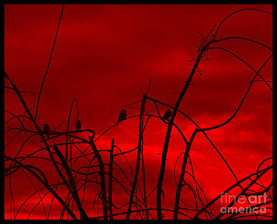 Art Print featuring the photograph Goldfinch Against Red by Heidi Manly