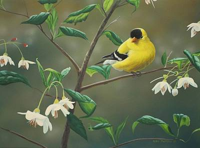 Goldfinch Wall Art - Painting - Goldfinch And Snowbells by Peter Mathios