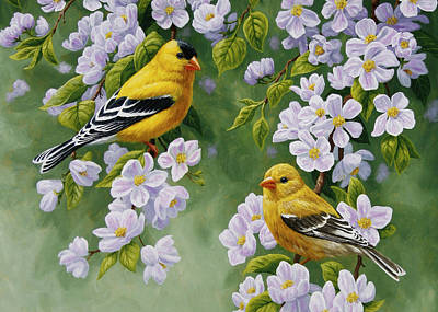 Goldfinch Blossoms Greeting Card 4 Print by Crista Forest