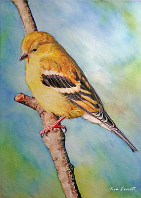New England Painting - Goldfinch Female by Ken Everett