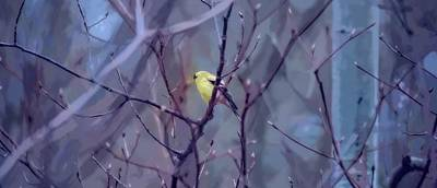 Goldfinch In The Woods 2 Art Print by Henry Kowalski