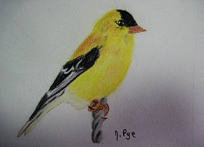 Pastel - Goldfinch by Joan Pye