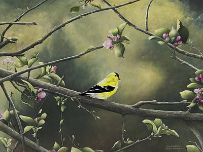 Arkansas Painting - Goldfinch by Mary Ann King