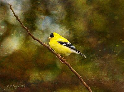 Digital Art - Goldfinch On A Limb by J Larry Walker