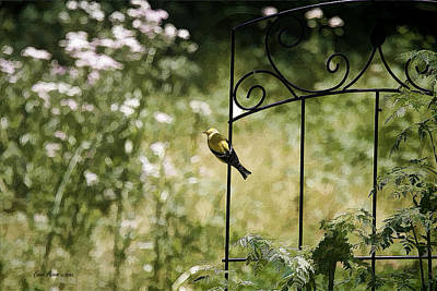 Goldfinch On The Lookout -19 Print by EricaMaxine  Price