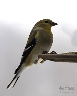 Photograph - Goldfinch by Roman Wilshanetsky