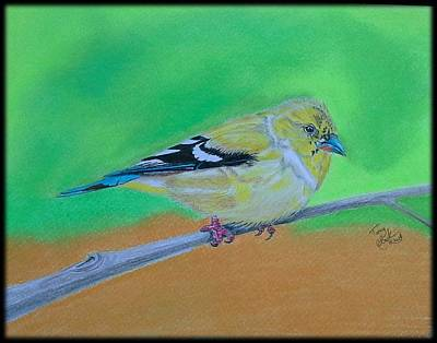Goldfinch Drawing - Goldfinch by Tony Clark