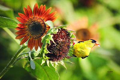 Photograph - Goldfinch With Sunflower 2 by Steven Llorca