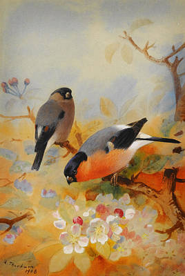 Bullfinch Wall Art - Painting - Goldfinches And Bullfinches by Celestial Images