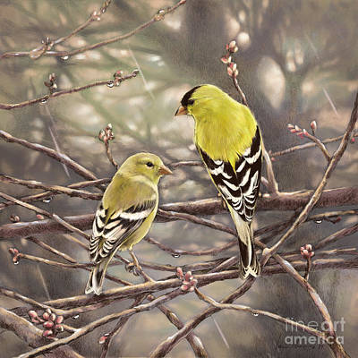 Wall Art - Drawing - Goldfinches In The Rain by Laurie Musser