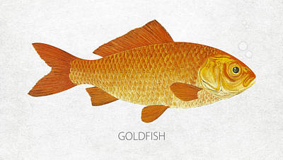Gold Fish Drawing - Goldfish by Aged Pixel