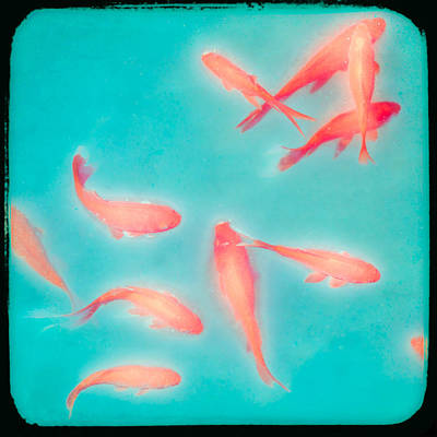 Photograph - Goldfish - Glowing Fish - Gary Heller by Gary Heller