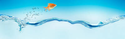 Goldfish Photograph - Goldfish Jumping Out Of Water by Panoramic Images
