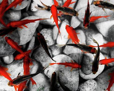 Goldfish Photograph - Goldfish Swimming In An Aquarium by Ron Koeberer