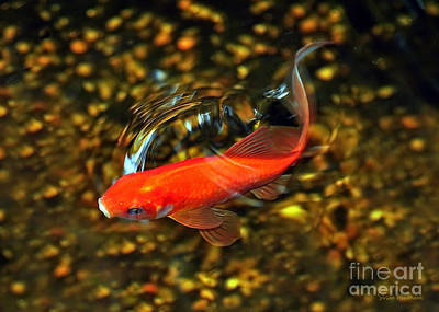 Photograph - Goldfish Swimming by Susan Wiedmann