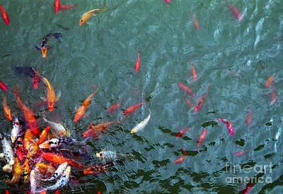 Photograph - Goldfish by Tom Brickhouse