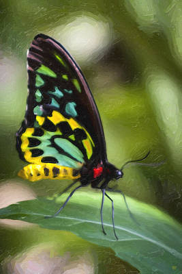 Butterfly Digital Art - Goliath Birdwing Butterfly by David Millenheft