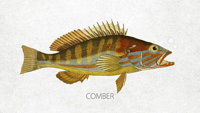 Fish Species Digital Art - Comber by Aged Pixel