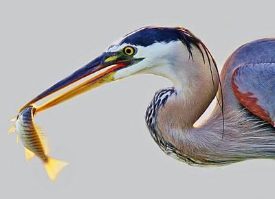 Gone Fishing Art Print by Paulette Thomas