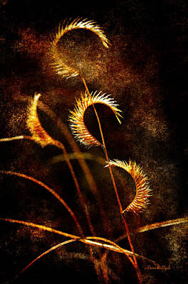 Art Print featuring the photograph Gone To Seed by Karen Slagle