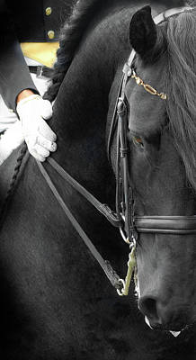 Black Friesian Photograph - Good Boy by Fran J Scott