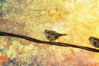 Photograph - Good Day Sunshine by Kathy Nairn