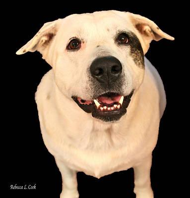 Best Friend Photograph - Good Dog by Bellesouth Studio