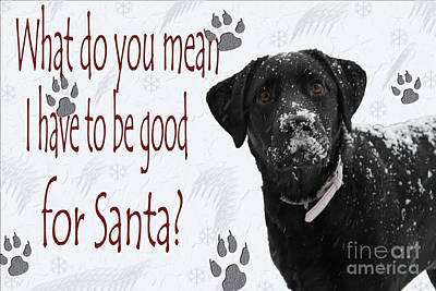 Lab Dog Digital Art - Good For Santa by Cathy  Beharriell