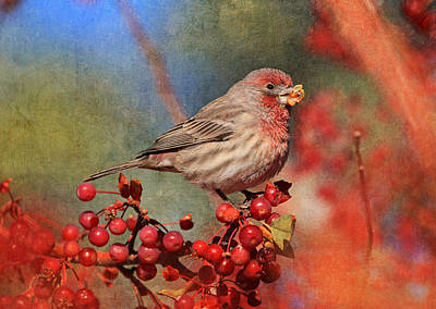 Red Finch Photograph - Good Grief   These Berries Sure Are Messy  by Donna Kennedy