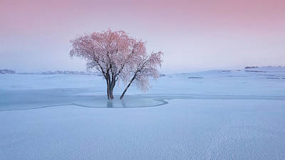 Hoarfrost Photograph - Good Morning by Bingo Z