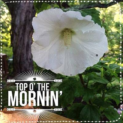 Good Morning!  Blooming Today, My White Art Print