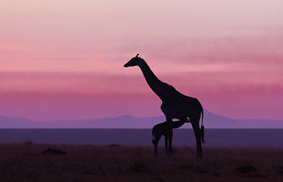 Good Morning Masai Mara 7 Art Print