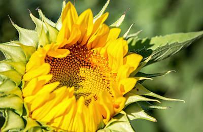 Photograph - Good Morning Sunshine by Deb Buchanan