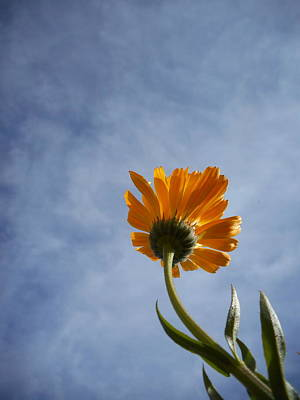 Photograph - Good Morning You Great Big Beautiful Blue Sky by Diannah Lynch