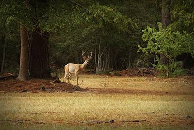 Nature Scene Digital Art - Good Night Deer by Linda Unger