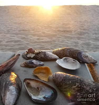 Photograph - Good Night Shells by Barbie Corbett-Newmin
