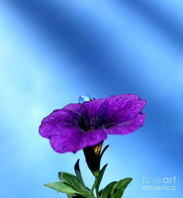 Petunia Photograph - Good To Be Alive by Krissy Katsimbras