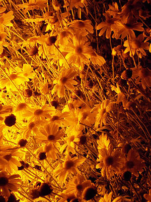Photograph - Goodnight Flowers by Guy Ricketts