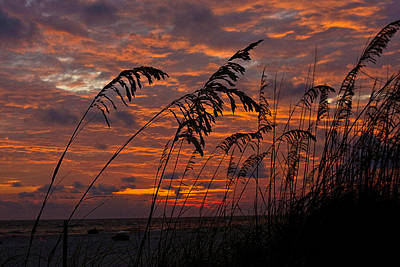 Photograph - Goodnight Sea Oats by Dan Wells