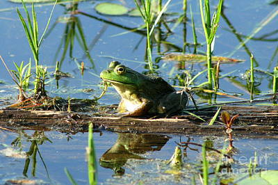 Photograph - James L. Goodwin Forest Frog Reflections  by Neal Eslinger